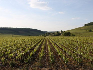 Private Luxury escorted Private Burgundy Day tour - Côte de Beaune with ***** hotel in Beaune- from Monday to Saturday
