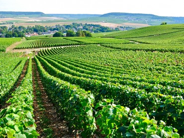 Champagne small group Day Tour of Moet & Chandon, Taittinger, Dom Perignon tasting lunch experience (optional) - 7/7
