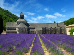 PROVENCE DAY TOURS - 1 DAY