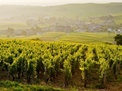 PRIVATE BURGUNDY TOURS