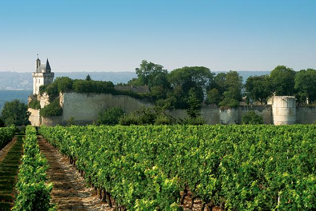 Vineyard of Chinon near by Bourgueil